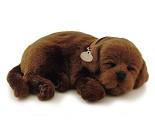 Kosedyr, brun Labrador som puster
