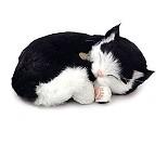 Kosedyr, sort og hvit katt som puster