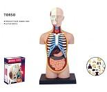 Hobbysett, 4D anatomi, menneskets indre organer