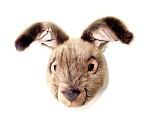 Hare - dyrehode fra Brigbys