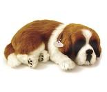 Kosedyr, St. Bernard hund som puster