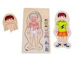 Menneskekroppen gutt - 5 lags puslespill i tre