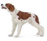 Breton hund, miniatyrfigur fra PAPO